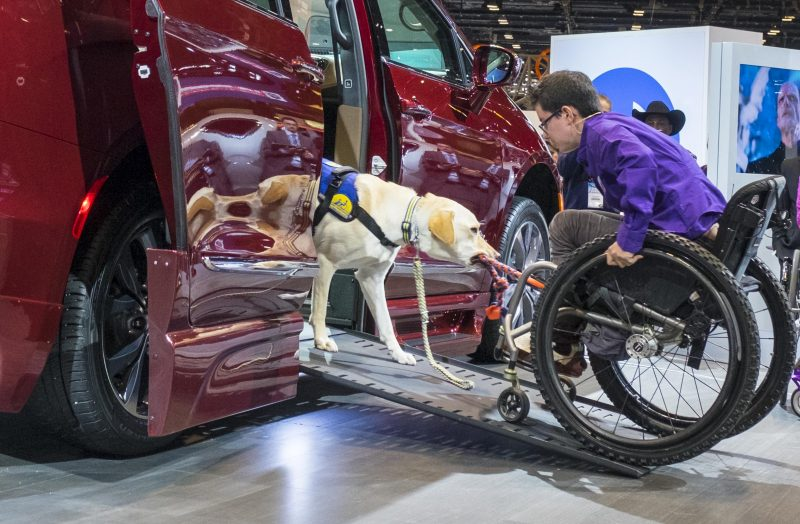 Mork, a companion dog for Wallis Brozman, provides assistance by pulling her wheelchair into the Chrysler Pacifica BraunAutomobility minivan.