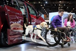 Mork, a companion dog for Wallis Brozman, demonstrates how he provides assistance getting a wheelchair in and out of the Chrysler Pacifica Braun Automobility minivan.