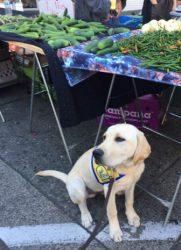 Foley at the Farmer's Market.
