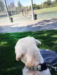 Foley at a baseball game.